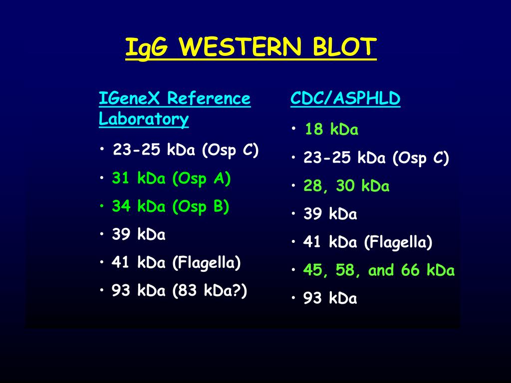 IgG WESTERN BLOT