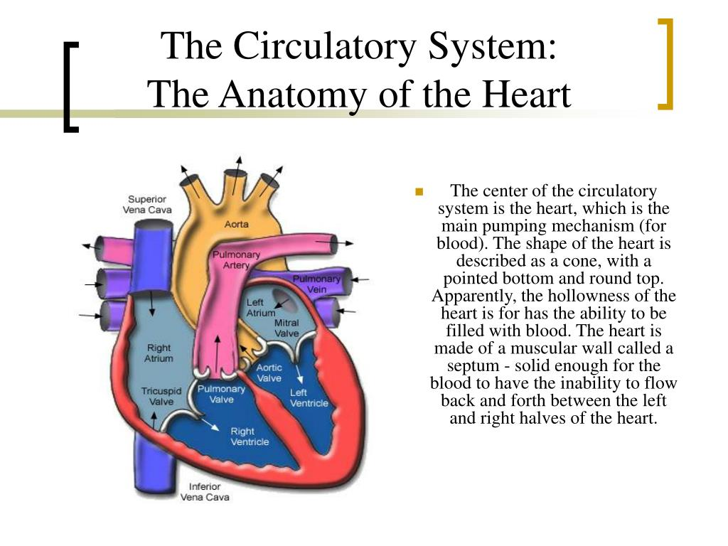thesis circulatory system Our circulatory system experts can research and write a new, one-of-a-kind, original dissertation, thesis, or research proposal—just for you—on the precise circulatory system topic of your choice our final document will match the exact specifications that you provide, guaranteed.