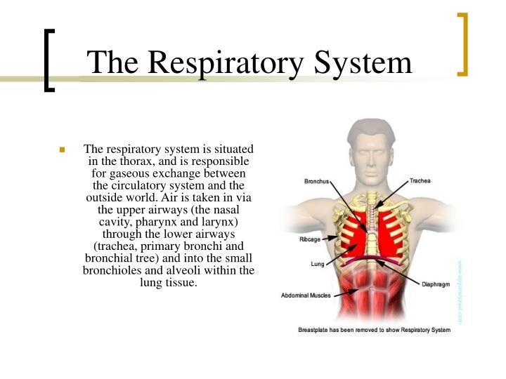 Ppt Circulatory Respiratory System Powerpoint Presentation Id