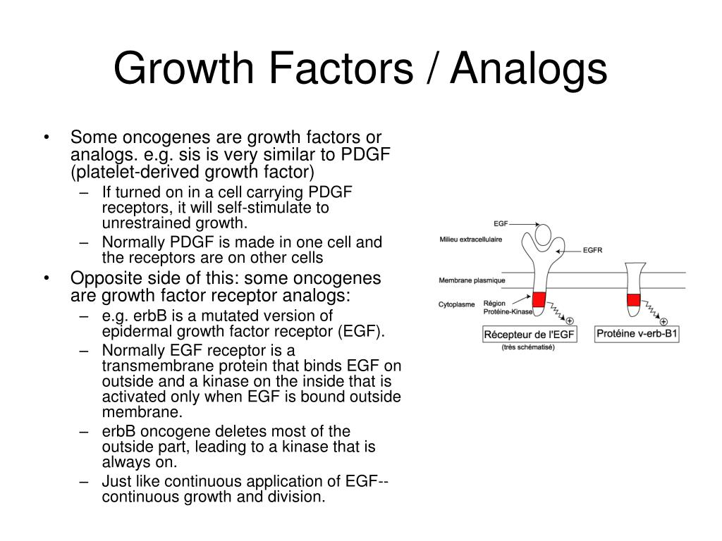 Growth Factors / Analogs