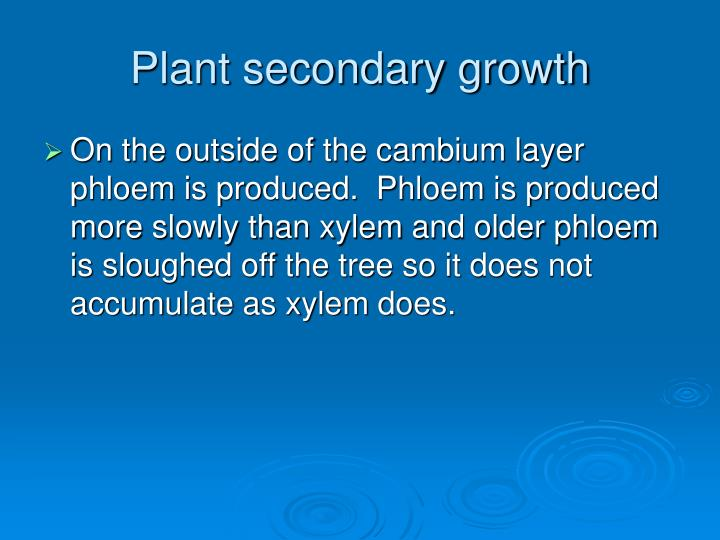 Plant secondary growth