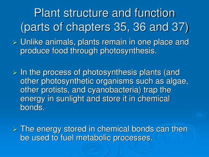 Plant structure and function parts of chapters 35 36 and 37