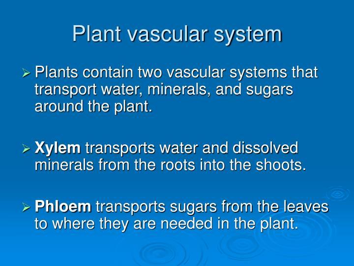Plant vascular system