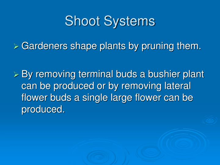 Shoot Systems