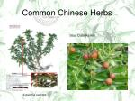 common chinese herbs