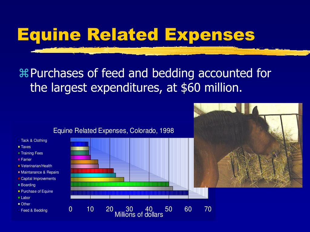 Equine Related Expenses