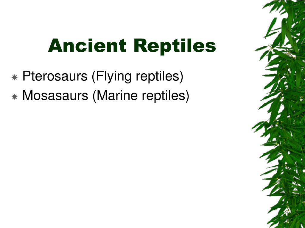 Ancient Reptiles