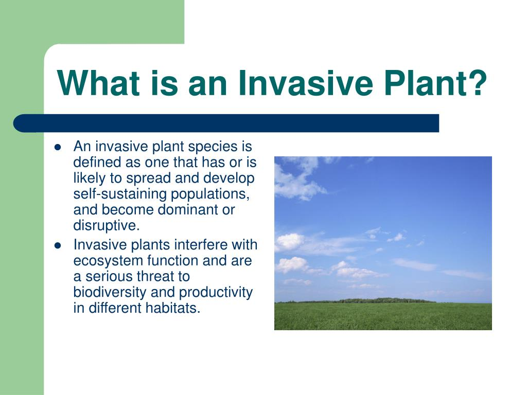 What is an Invasive Plant?