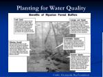 planting for water quality