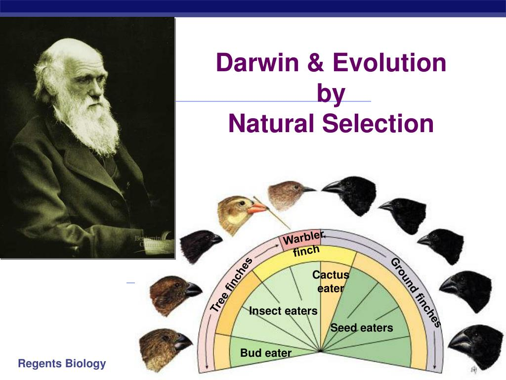 darwin evolution by natural selection l.