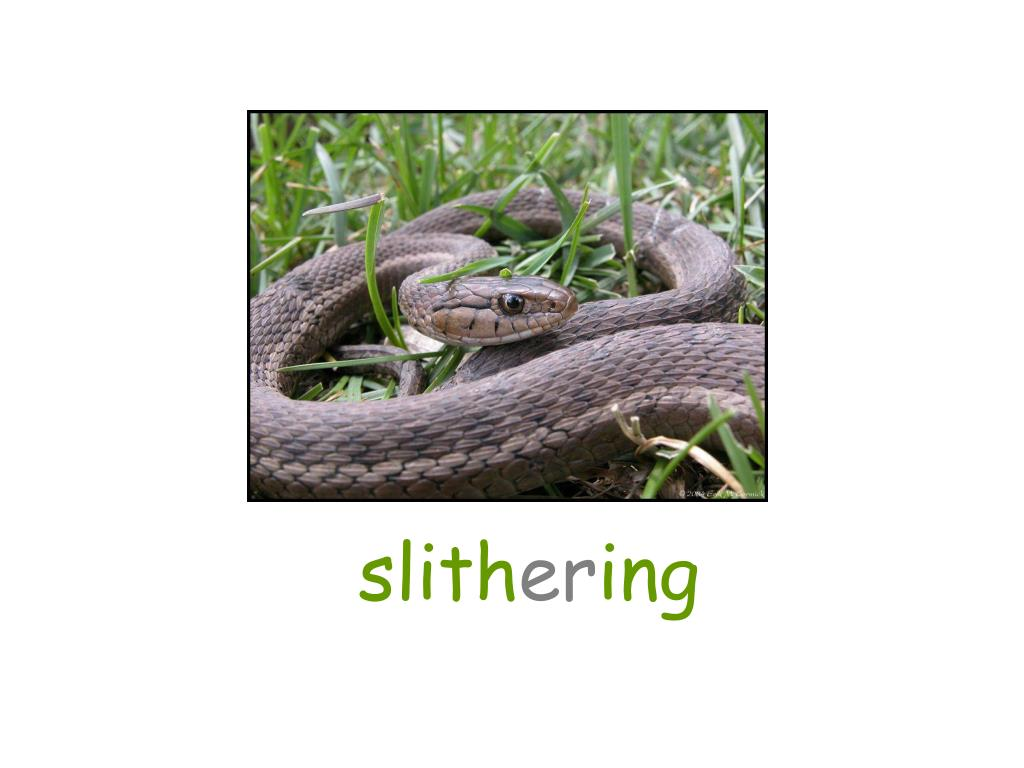slith