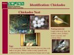 identification chickadee18