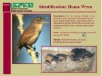 identification house wren
