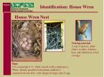 identification house wren16