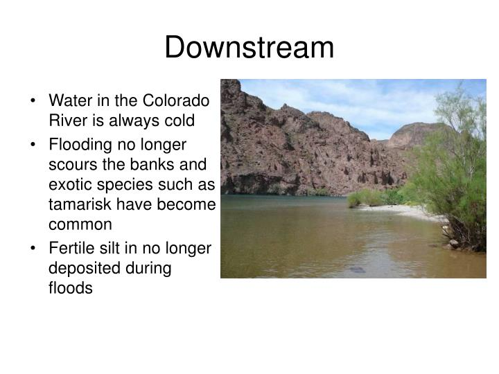 Water in the Colorado River is always cold