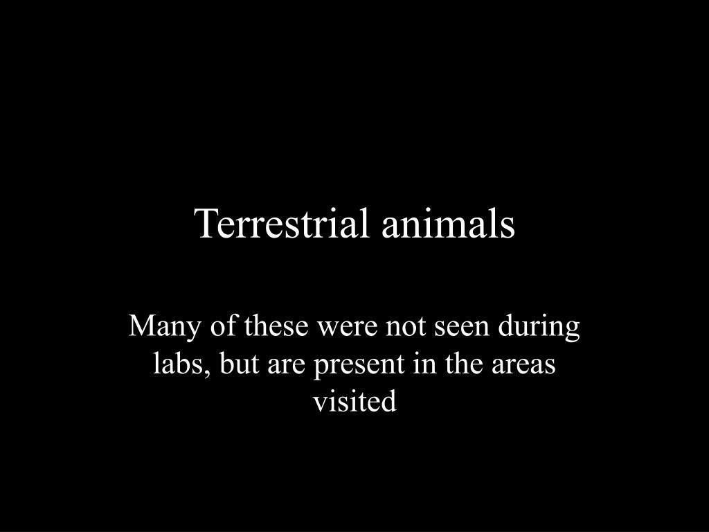 terrestrial animals l.