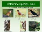 determine species size