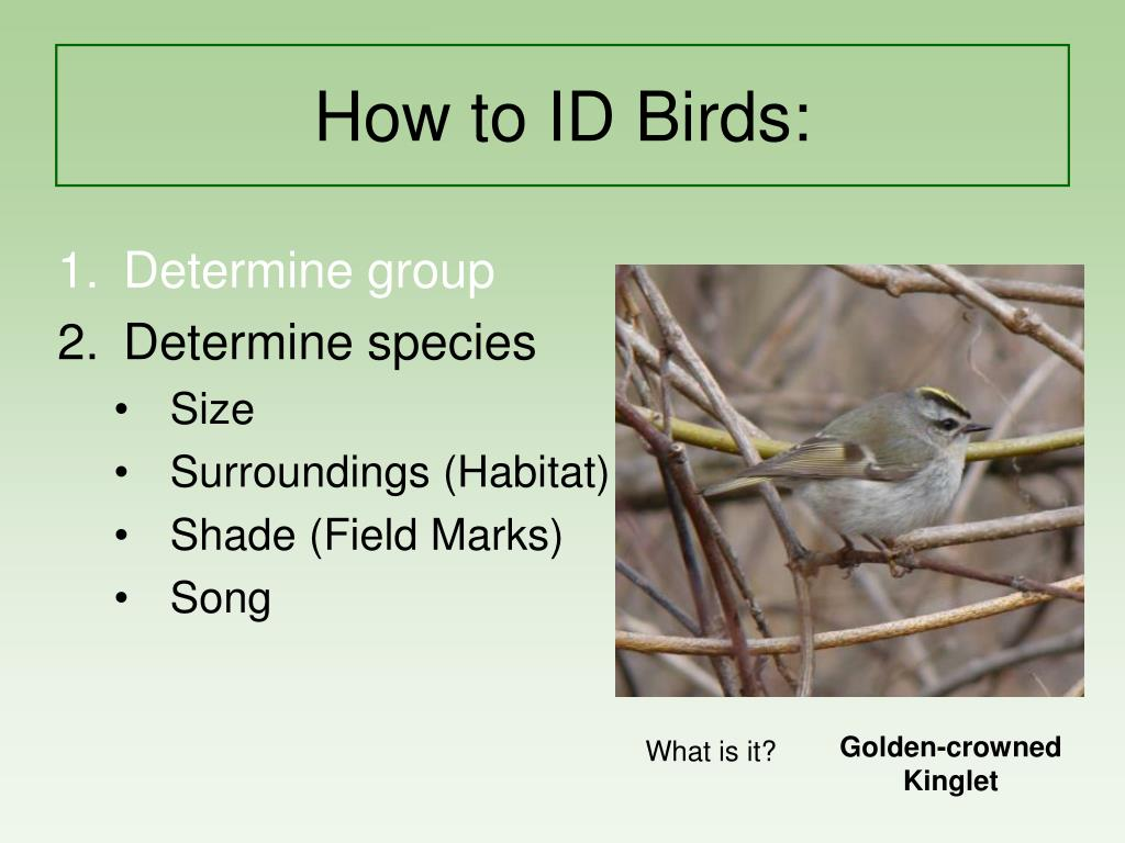 how to id birds l.