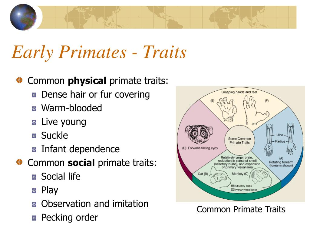 Early Primates - Traits