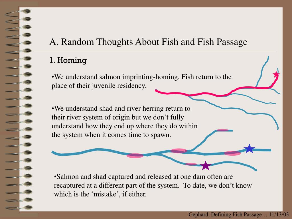A. Random Thoughts About Fish and Fish Passage