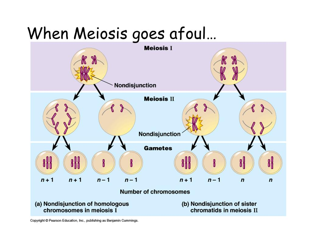 When Meiosis goes afoul…