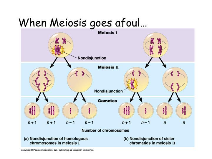When meiosis goes afoul