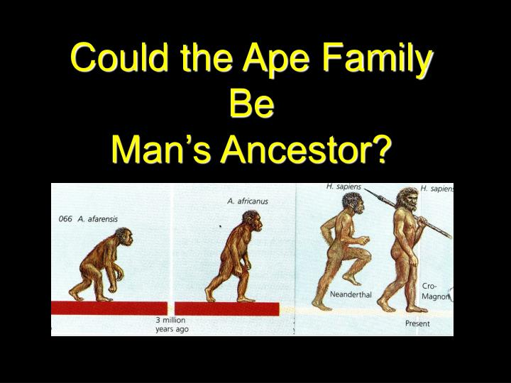 Could the ape family be man s ancestor