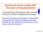 animal and human studies md the issue of lung penetration