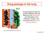 drug passage in the lung