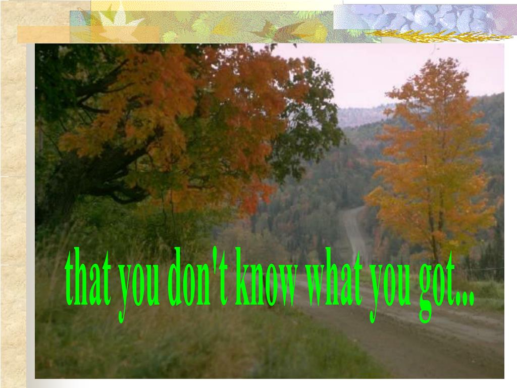 that you don't know what you got...