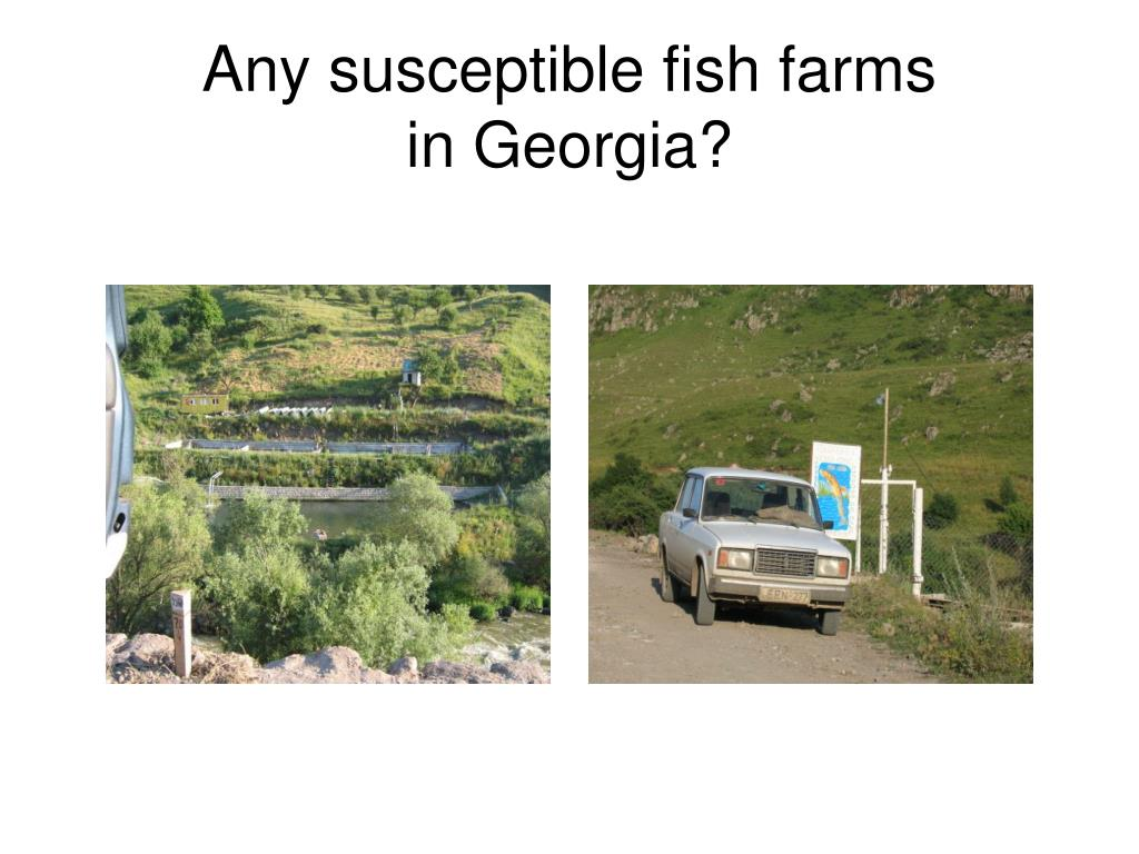 Any susceptible fish farms