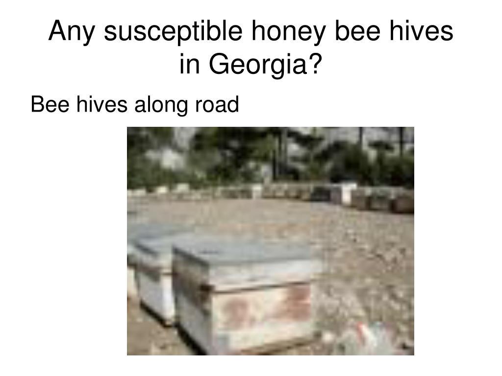 Any susceptible honey bee hives