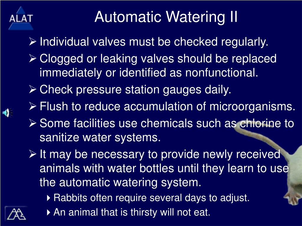 Automatic Watering II