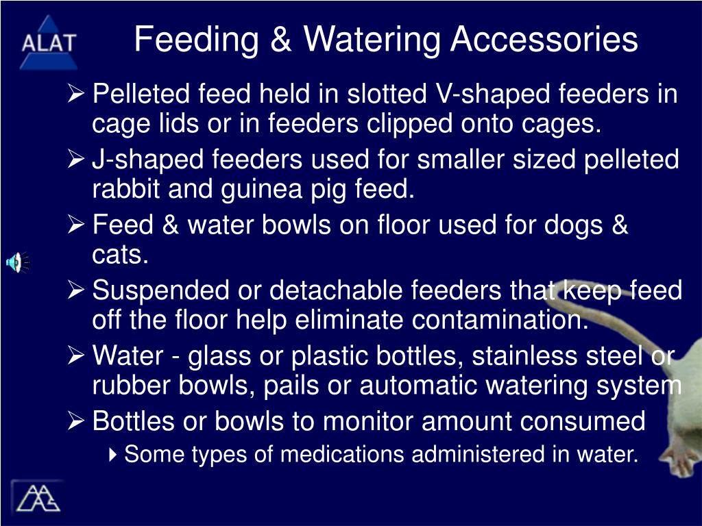 Feeding & Watering Accessories