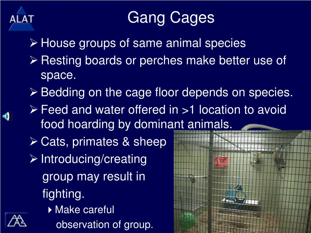 Gang Cages