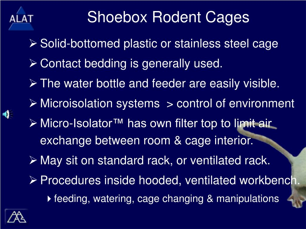 Shoebox Rodent Cages