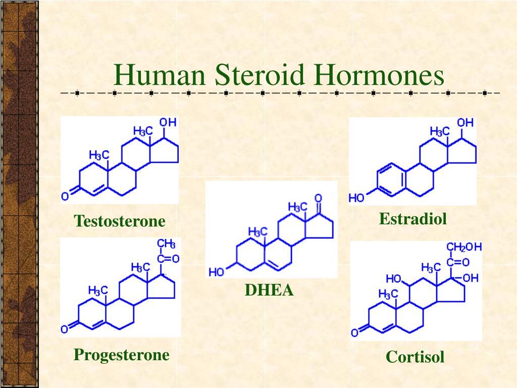 Human Steroid Hormones