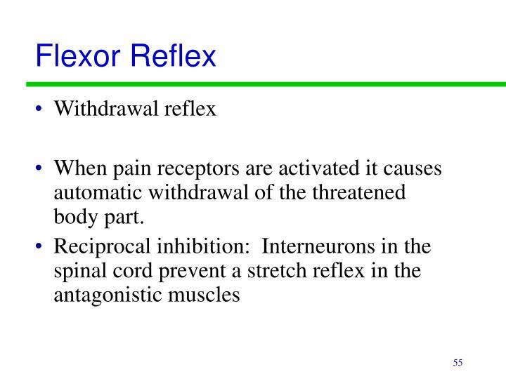 Flexor Reflex