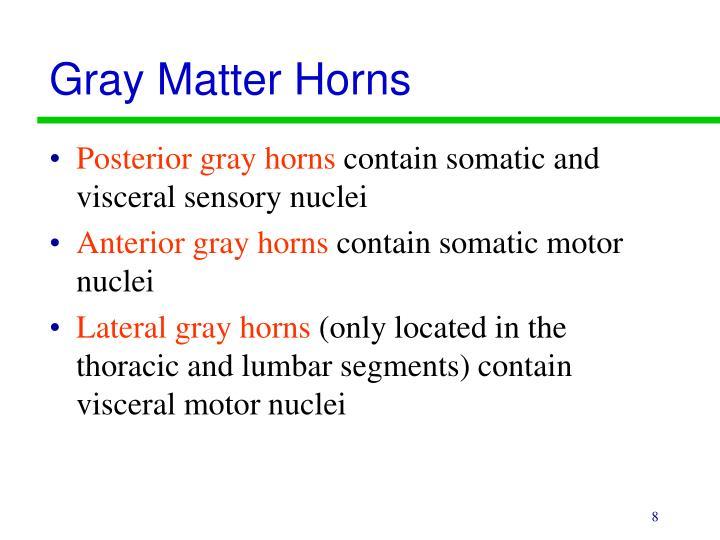 Gray Matter Horns