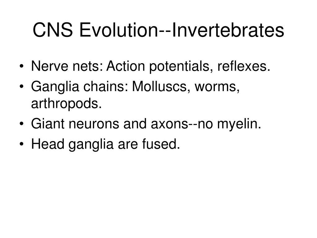 CNS Evolution--Invertebrates