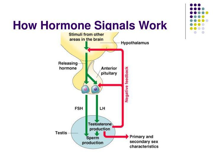 How Hormone Signals Work