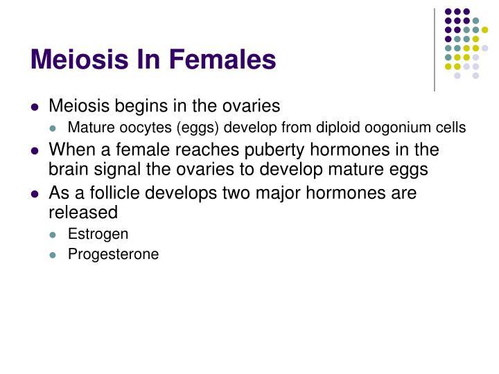 Meiosis In Females