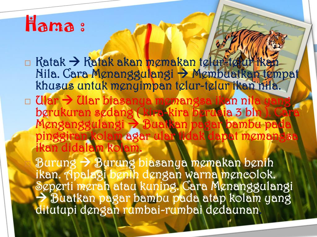 Hama :
