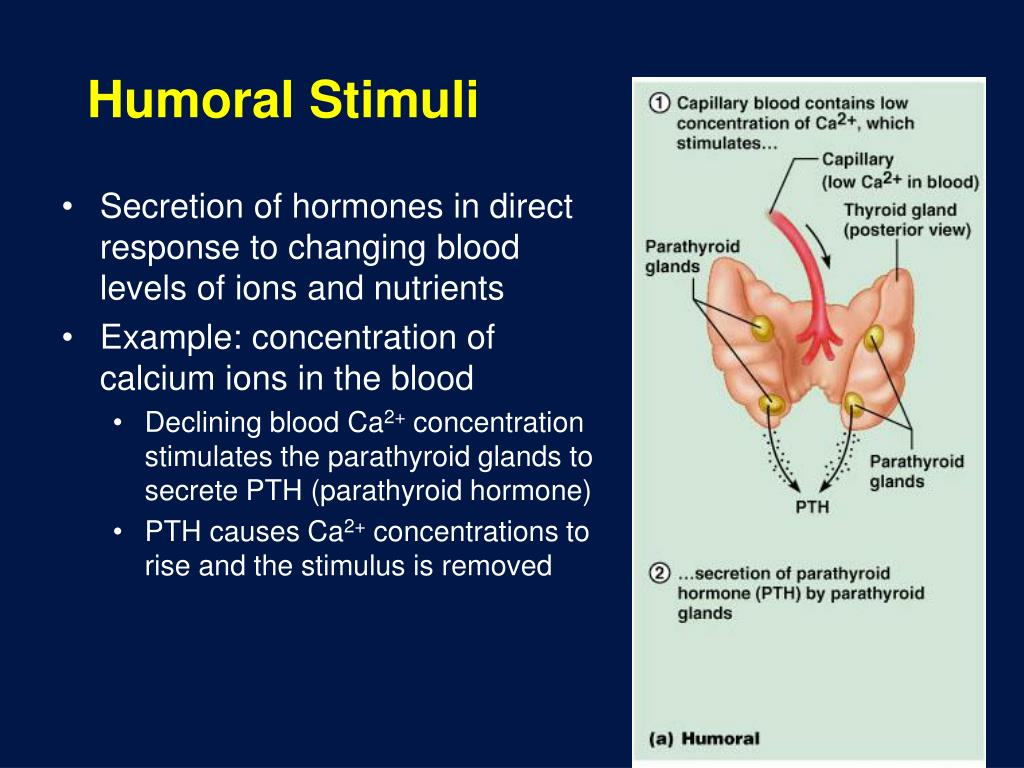 humoral stimuli hormones endocrine ppt powerpoint presentation system hormonal example neural levels response blood