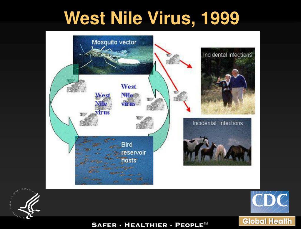 West Nile Virus, 1999