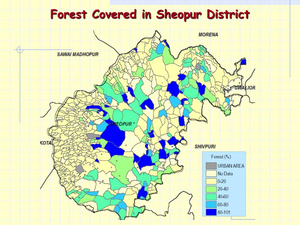Forest Covered in Sheopur District