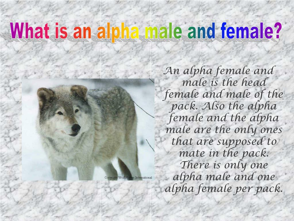 What is an alpha male and female?