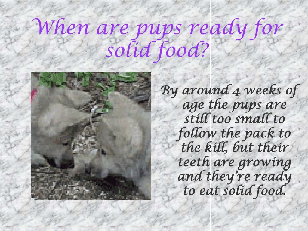 When are pups ready for solid food?