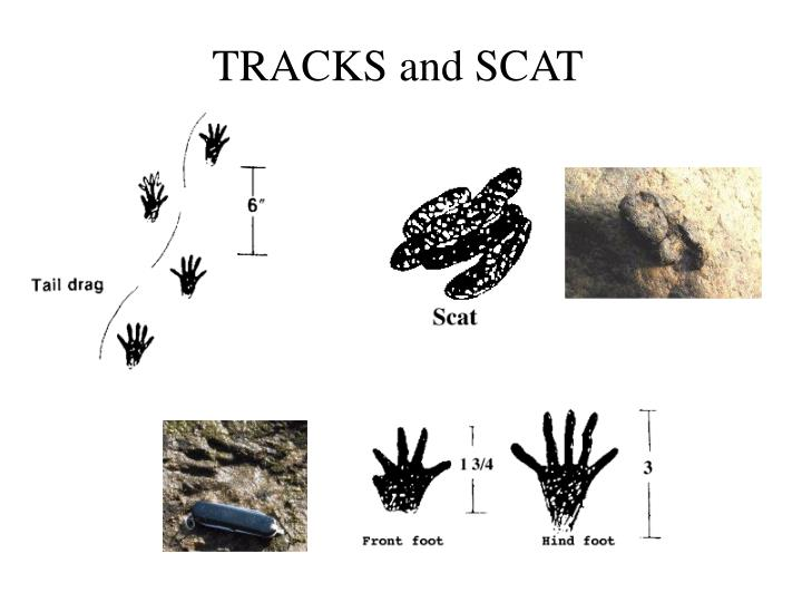 TRACKS and SCAT