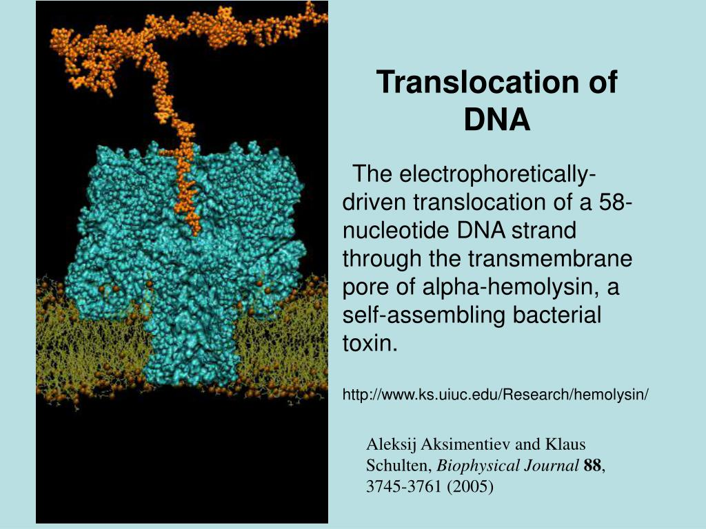 Translocation of DNA